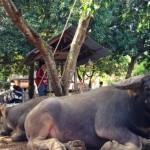 バリ島のテンガナン