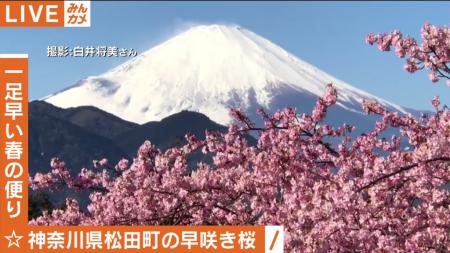 AbemaTV 河津桜と富士山