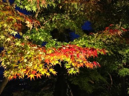 長谷寺の紅葉ライトアップ