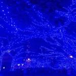目黒川 青の洞窟