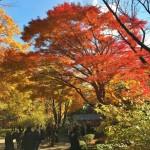 皇居・東御苑内の二の丸雑木林