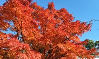 皇居 紅葉の乾通り一般公開