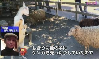 NHK 特ダネ投稿DO画