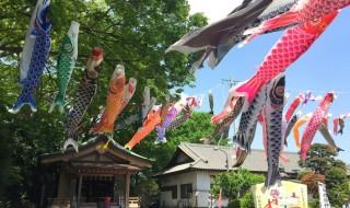 白旗神社の鯉のぼり