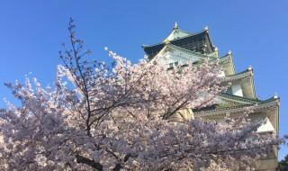 大阪城と満開の桜