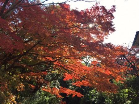 通玄橋の紅葉