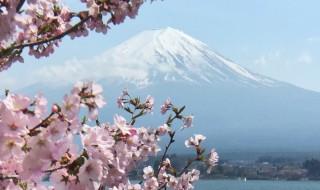 河口湖の長崎公園の桜