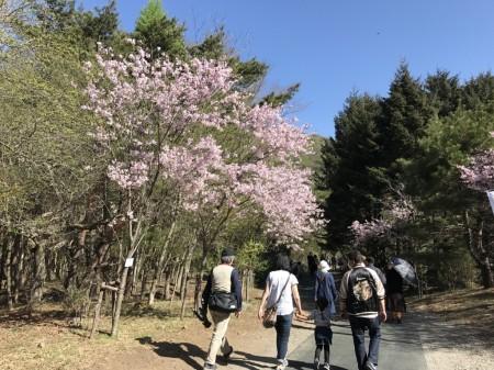 富士芝桜まつり 会場への通路