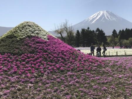 富士芝桜まつり ミニ富士山