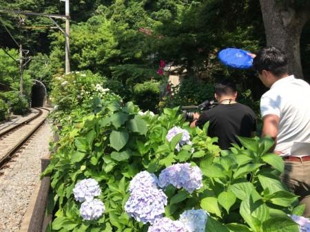 鎌倉 御霊神社のアジサイ