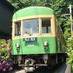 鎌倉 御霊神社のアジサイと江ノ電