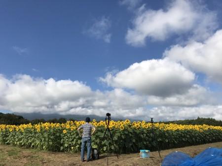 山中湖花の都公園 第二ゲート付近のひまわり