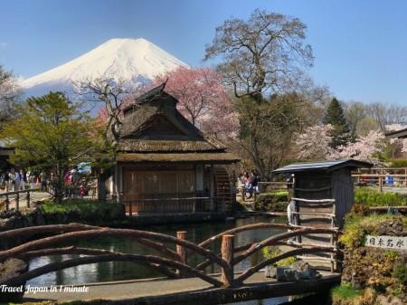 忍野八海 富士山と桜