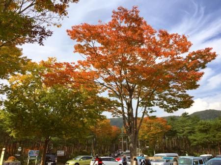 道の駅鳴沢