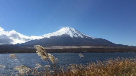 長池親水公園からススキと富士山