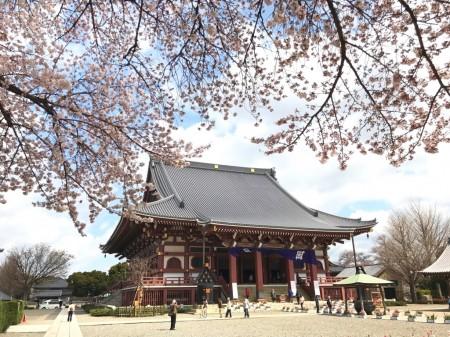 池上本門寺の大堂と桜