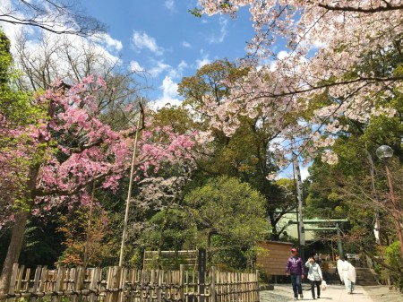 報徳二宮神社の桜