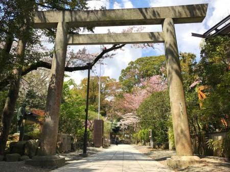 報徳二宮神社の鳥居と桜