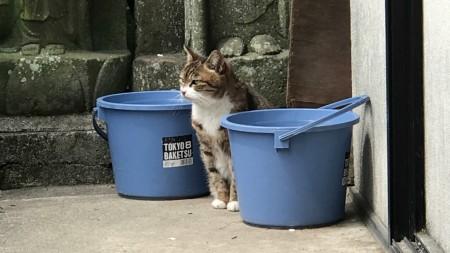 鎌倉光明寺の猫