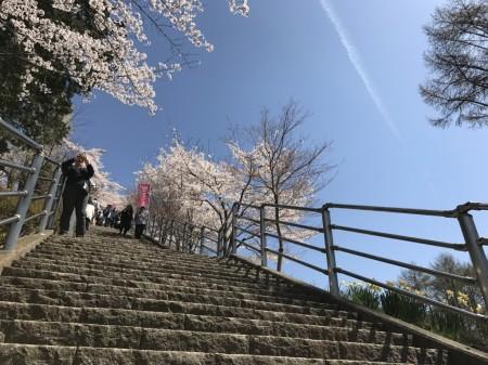 新倉山浅間公園の咲くや姫階段