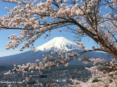 新倉山浅間公園の富士山と桜