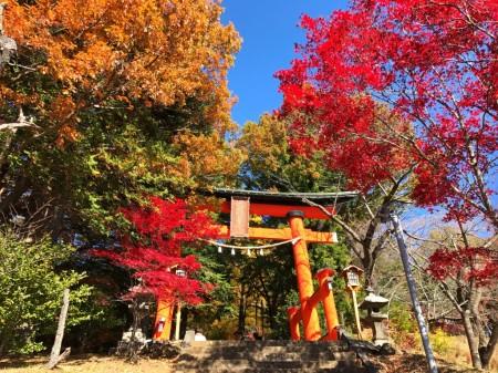 新倉山浅間公園の紅葉と鳥居