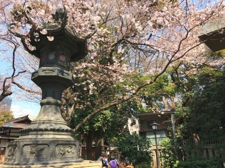 靖国神社の白鳩鳩舎と桜
