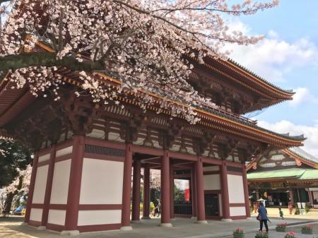 池上本門寺の仁王門と桜