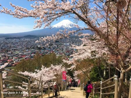 新倉山浅間公園の咲くや姫階段と富士山、桜