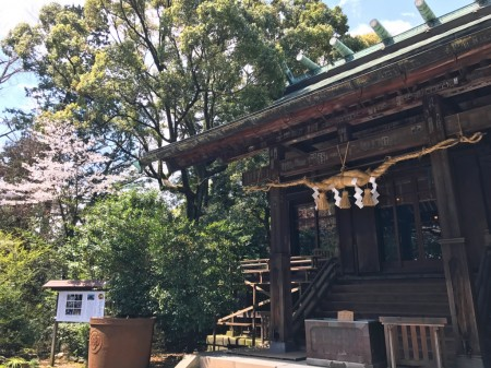報徳二宮神社の御社殿と桜
