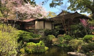 報徳二宮神社の神池と桜