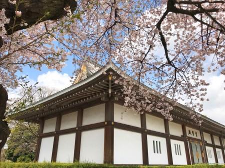 池上本門寺の霊宝殿と桜