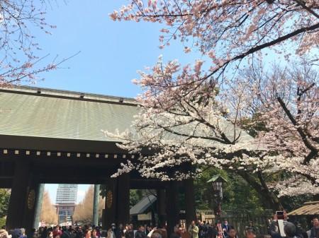 靖国神社の神門と桜