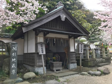 鎌倉光明寺の延命地蔵尊と桜