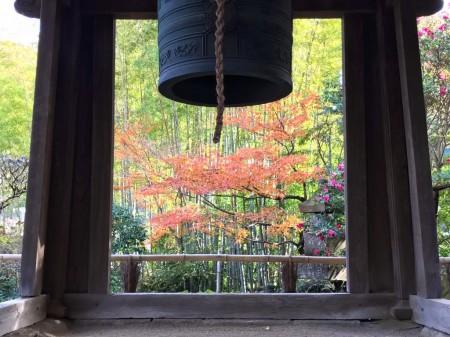 報国寺竹林と紅葉
