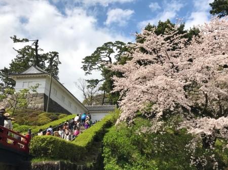 小田原城常盤木門と桜