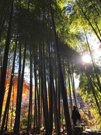 明月院と紅葉と竹林