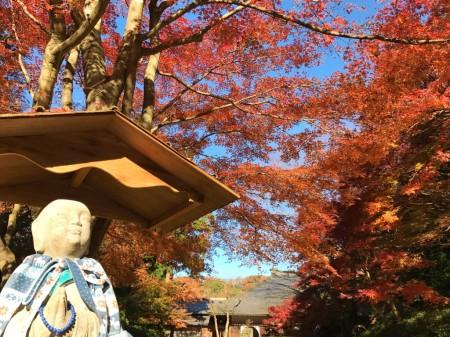 明月院の庭園と紅葉