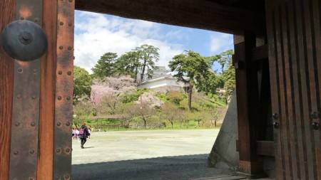 小田原城の銅門から天守閣と桜