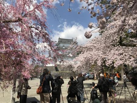 小田原城天守閣と桜を撮るカメラマンたち