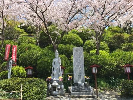 大船観音で桜と慰霊