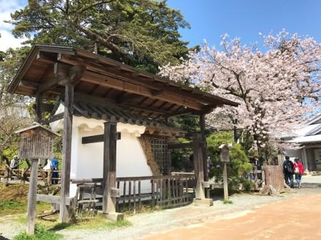小田原城銅門礎石と桜