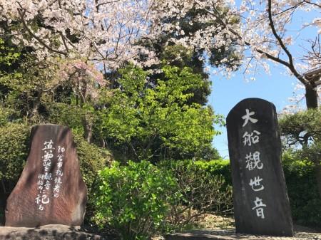 大船観音で桜と石碑