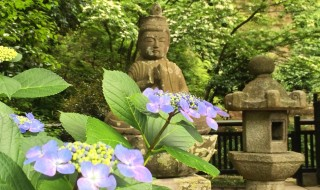 鎌倉 東慶寺のあじさい