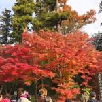 鎌倉 円覚寺の紅葉