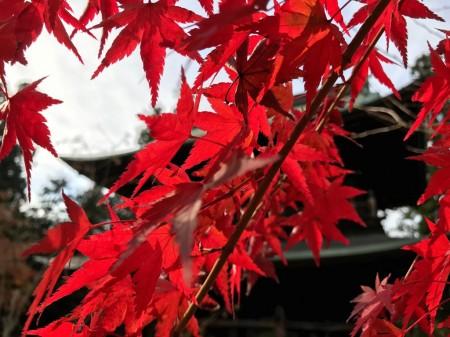 鎌倉 円覚寺山門の紅葉