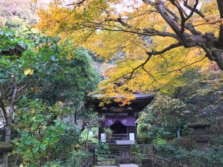 鎌倉 円覚寺黄梅院の紅葉