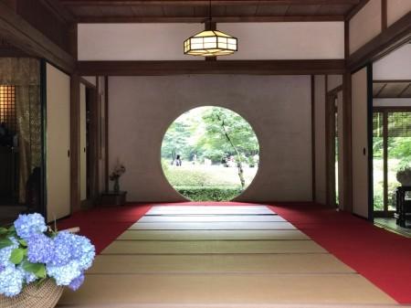 明月院の方丈内の円窓とあじさい
