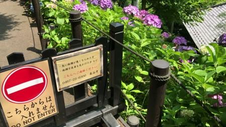 鎌倉 長谷寺 あじさい路