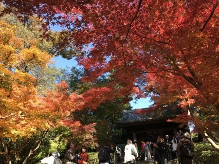 鎌倉 円覚寺 総門の紅葉